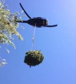 drughelicopter_bust_1_246_274_c1