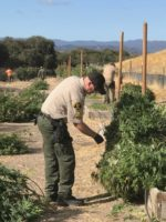 7,520 Pounds of Marijuana Seized in Monterey County Bust