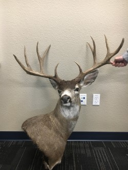 Lodi Man Convicted of Poaching Large Deer