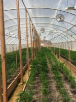 CDFW Wardens Assist Humboldt County Deputies in Illegal Grow Investigation
