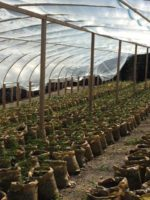 CDFW Wardens Assist Humboldt County Sheriff's Deputies in Marijuana Cultivation Busts
