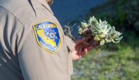 Three People Convicted for Poaching Succulents in Humboldt County