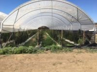 CDFW Wardens & Santa Barbara Sheriff's Deputies Eradicate $4 Million Dollars' Worth of Illegal Marijuana