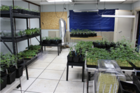 One Arrested in Illegal Cannabis Cultivation Case