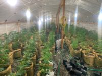 Two Arrested in Humboldt County for Illegal Cannabis Cultivation