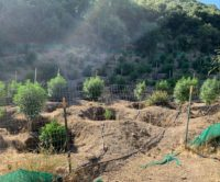 CDFW Wardens Assist With Removal of Illegal Marijuana Grow in Monterey County