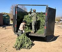 CDFW Assists Riverside County Sheriff's Department with Marijuana Cultivation Search Warrants
