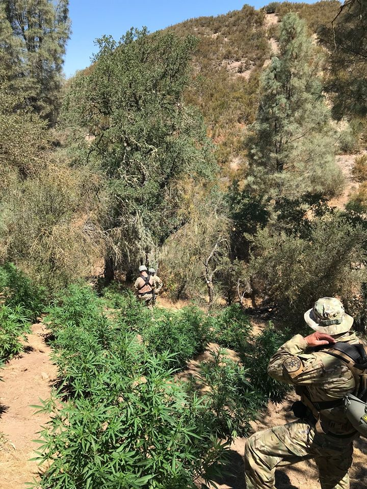 State Agents, Wardens & Investigators Assist with Illegal Cannabis Investigations in SLO County