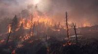 State Park Ranger Detains Arson Suspect in Monterey County