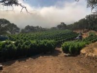 CDFW Wardens Assist with Cannabis Compliance Warrant in Santa Barbara County