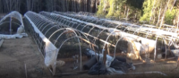 State Law Enforcement Officers Investigate Illegal Cannabis Cultivation in Humboldt County