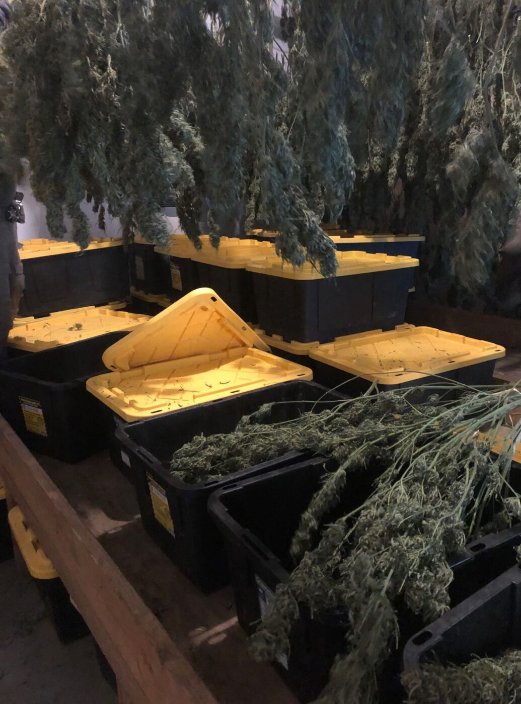 CDFW Assists with Marijuana Enforcement Team Operation in Humboldt County