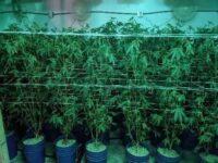 BCC Investigators Target Unlicensed Cannabis Activity in Woodland Hills
