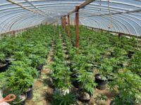 CDFW Helps Riverside County Sheriff with Illegal Marijuana Cultivation Search Warrants