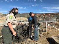 Two Arrested in Ventura County for Animal Cruelty