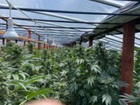 Riverside County Sheriff's Department and CDFW Search for Illegal Marijuana Cultivation