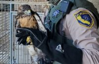 CDFW and RCSD Find Caged Hawks, Stolen Vehicles and Ghost Guns at Coachella Home & Ranch