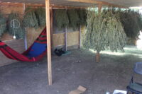 """Cal Cannabis and CDFW Assist with """"Operation Sentinel"""" in Fresno County"""