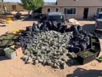 CDFW Wardens Assist with Illegal Marijuana Cultivation Investigation in San Bernardino County
